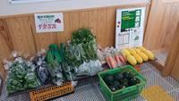 橋本市の野菜