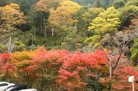 紅葉でヨガ やどり温泉