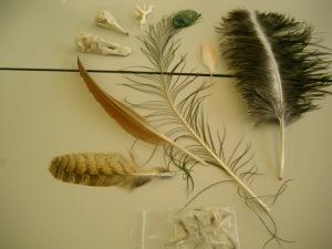 鳥の骨や羽