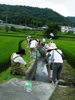 エコクラブ活動で、田んぼの生き物観察会