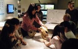 きしわだ自然資料館で動物の歯のレプリカづくり